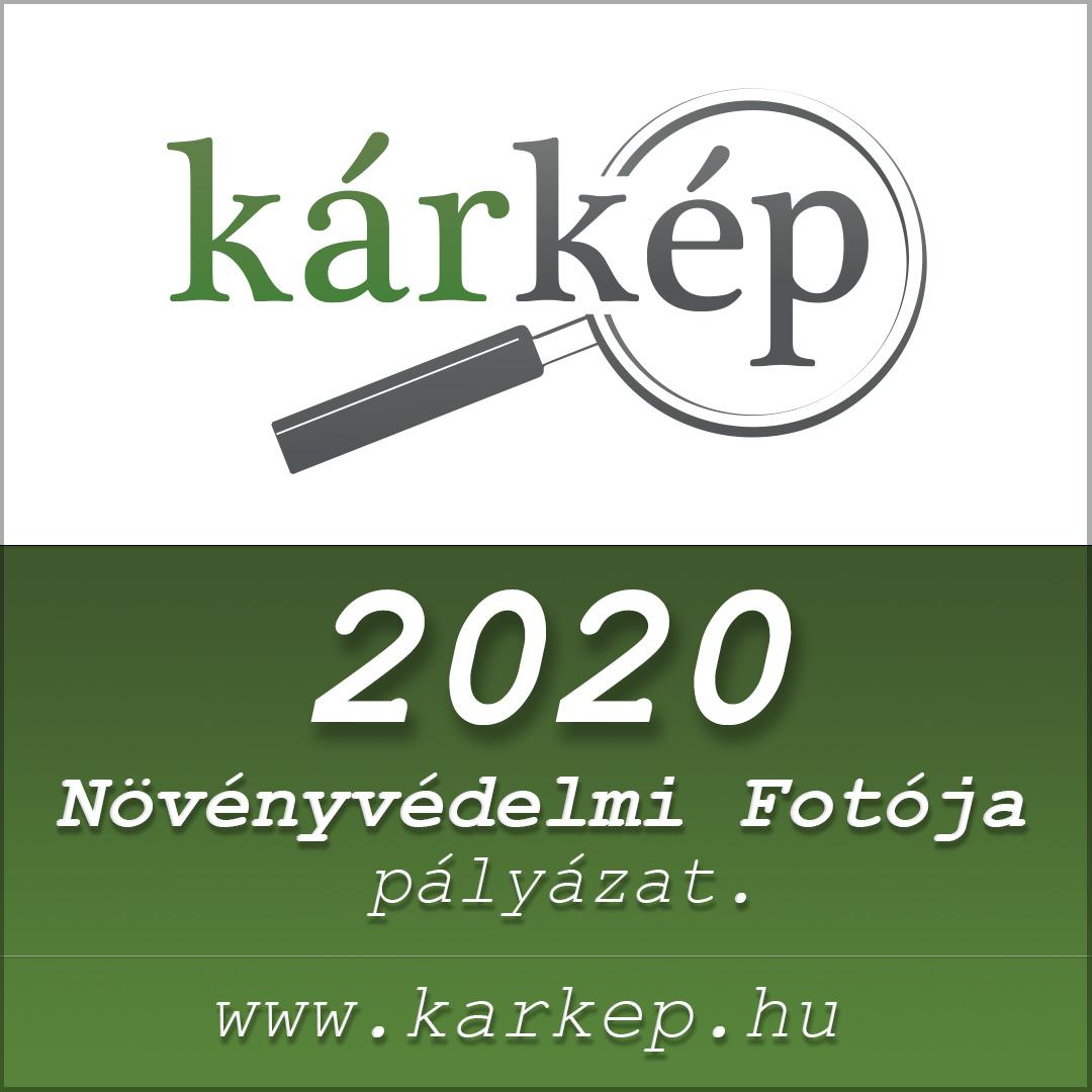Kárkép fotópályázat 2020
